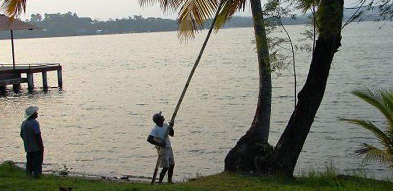 cocos na guatemala rio dulce