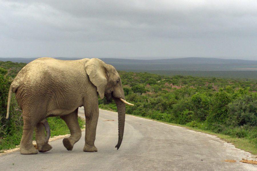 elefante addo elephant park