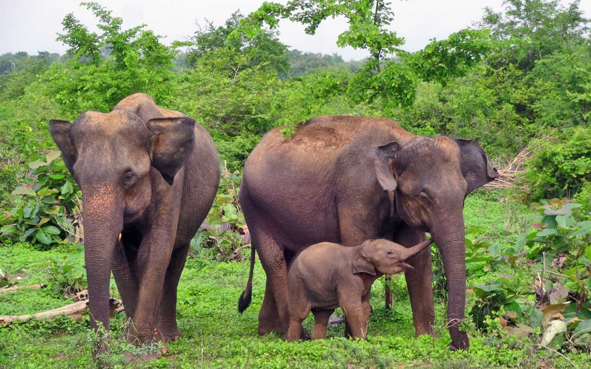 Udawalawe, Sri Lanka