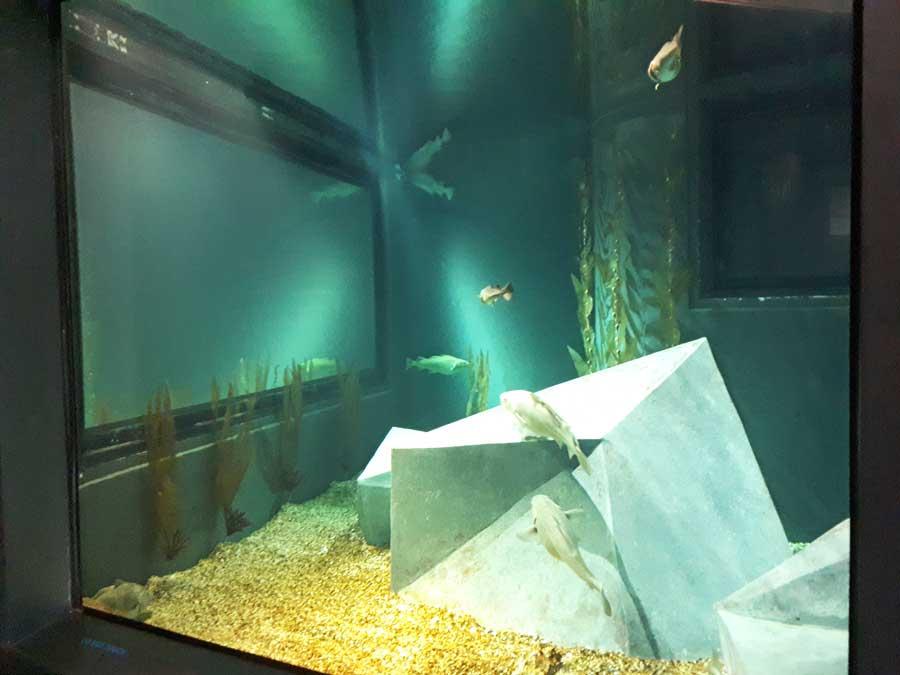 Aquário dos Bacalhaus
